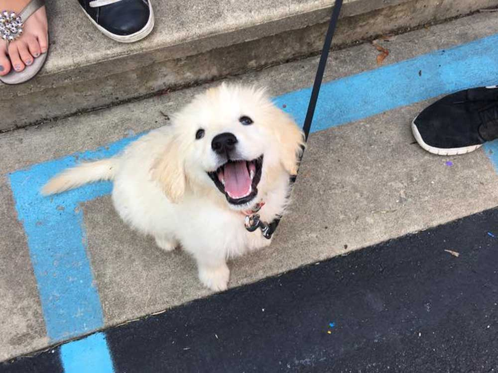 Barley as a puppy