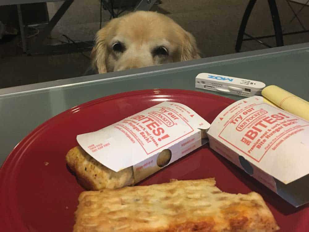 dental marketing dogs